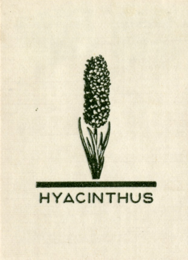 4_45_Hyacinthus.jpg