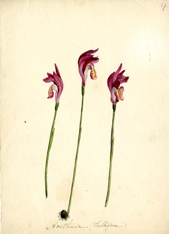 Wildflowers_4.jpg
