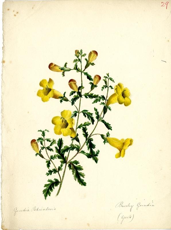 Wildflowers_29.jpg