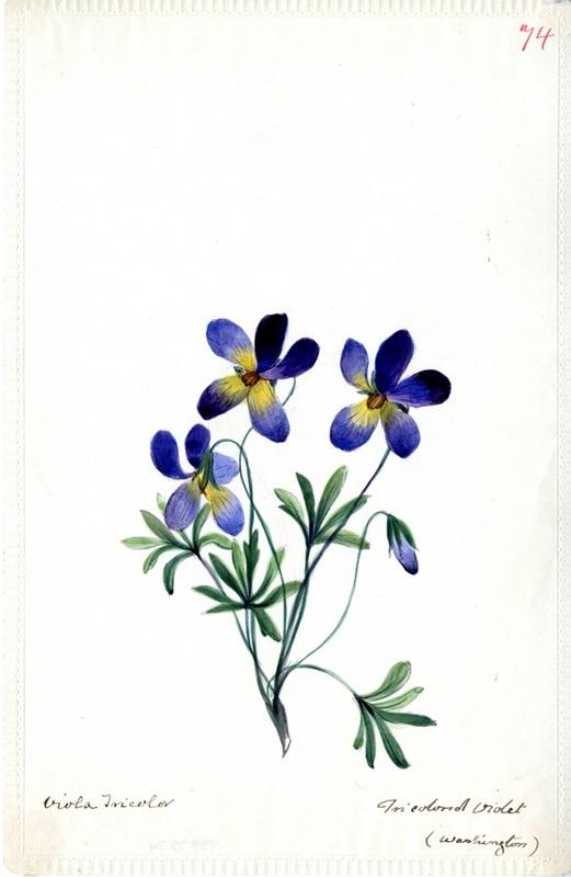 Wildflowers_74.jpg