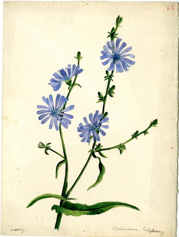 Wildflowers_66.jpg