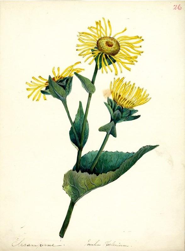 Wildflowers_26.jpg