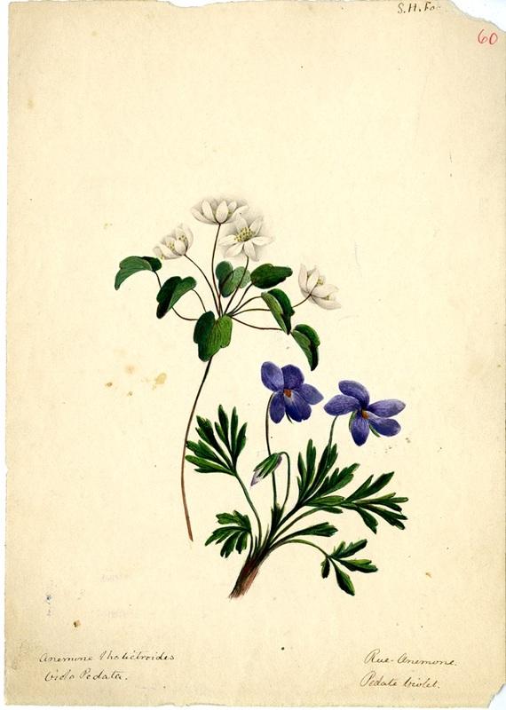 Wildflowers_60.jpg