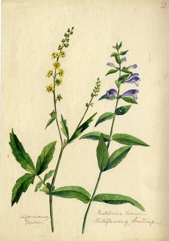 Wildflowers_2.jpg