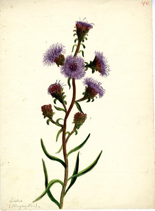 Wildflowers_40.jpg