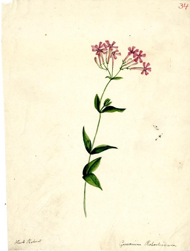 Wildflowers_34.jpg