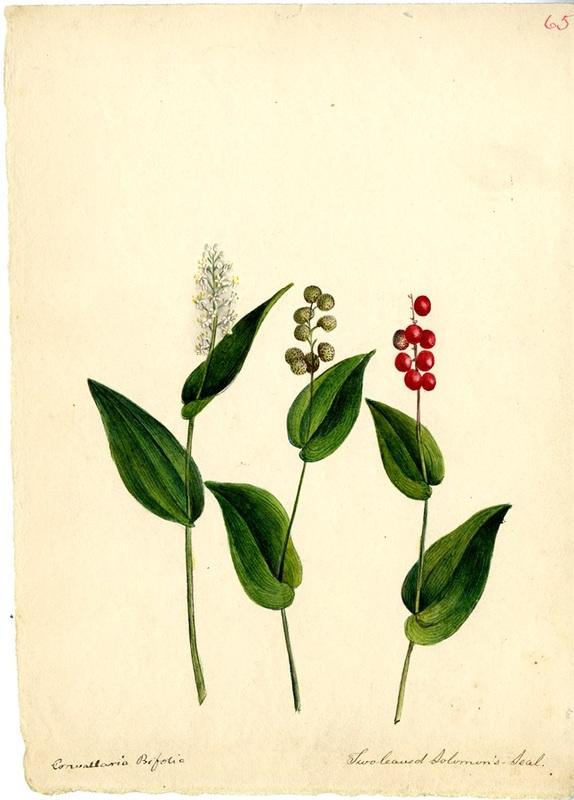 Wildflowers_65.jpg