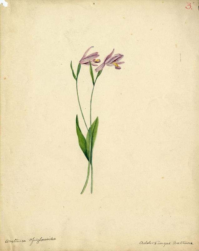 Wildflowers_3.jpg