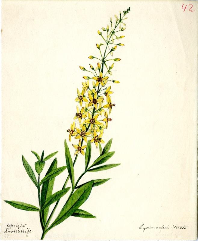 Wildflowers_42.jpg