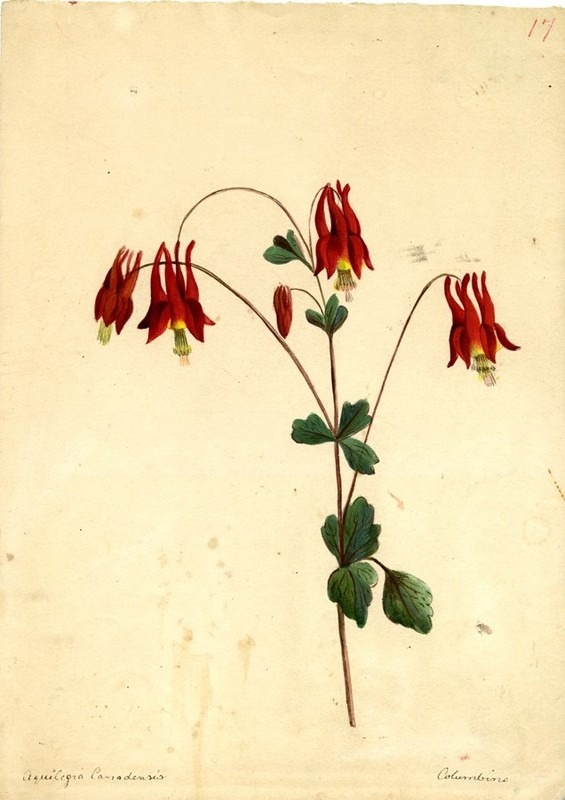 Wildflowers_17.jpg