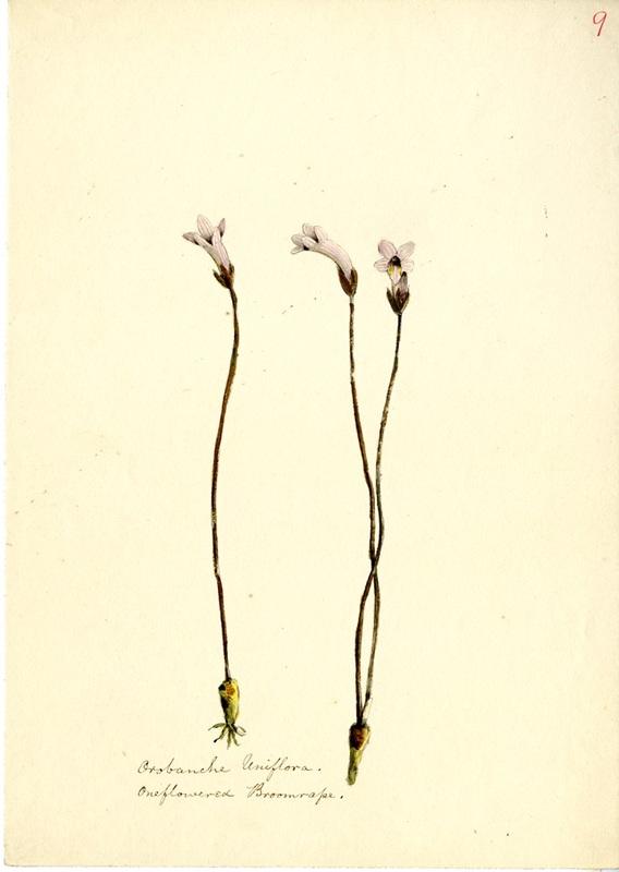 Wildflowers_9.jpg