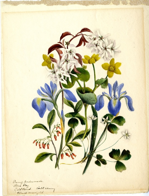 Wildflowers_75.jpg