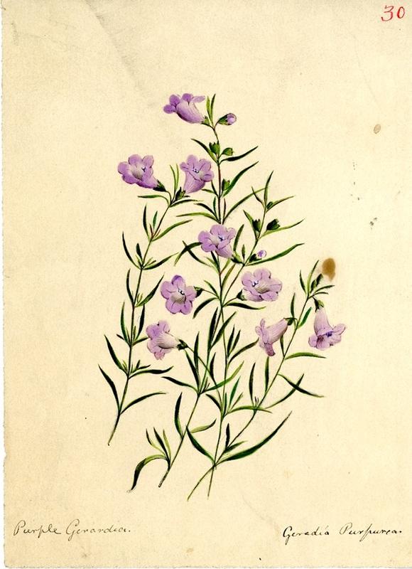 Wildflowers_30.jpg