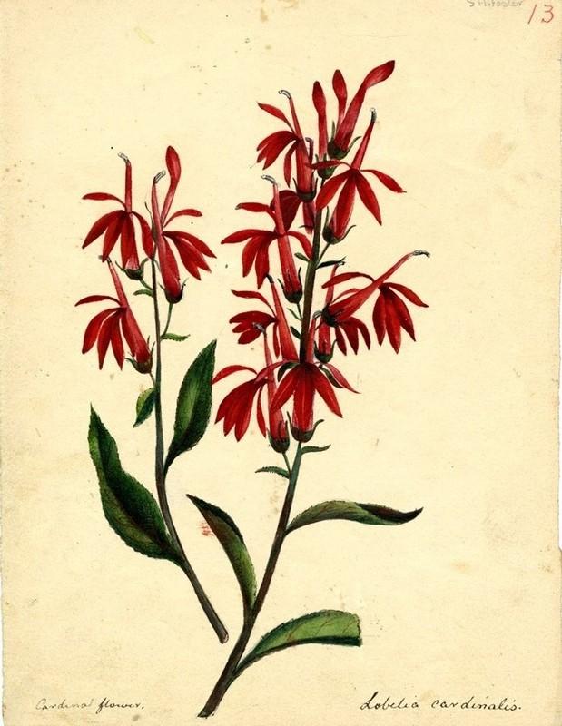 Wildflowers_13.jpg