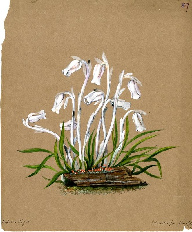 Wildflowers_37.jpg