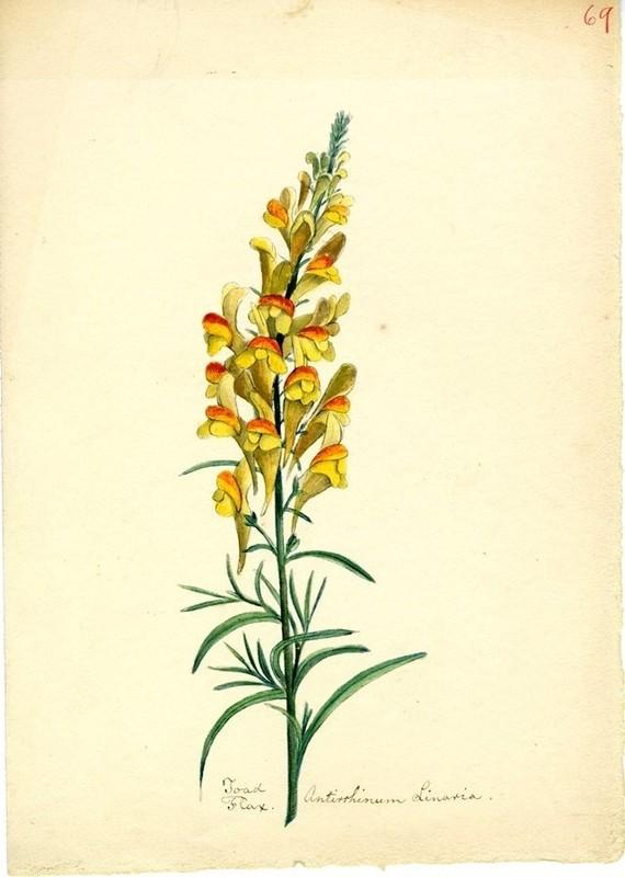 Wildflowers_69.jpg