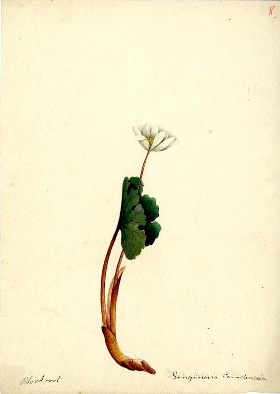 Wildflowers_8.jpg