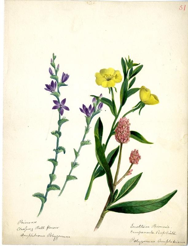 Wildflowers_51.jpg
