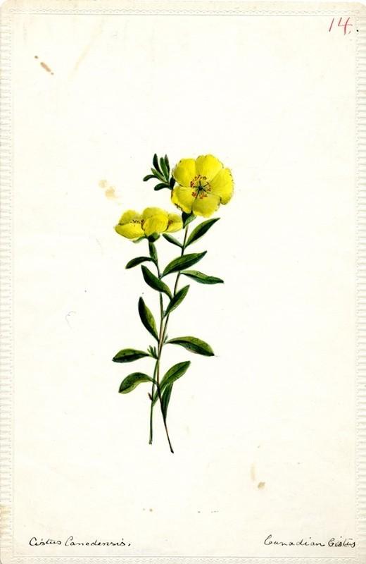 Wildflowers_14.jpg