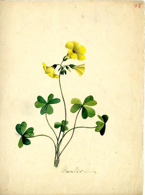 Wildflowers_48.jpg