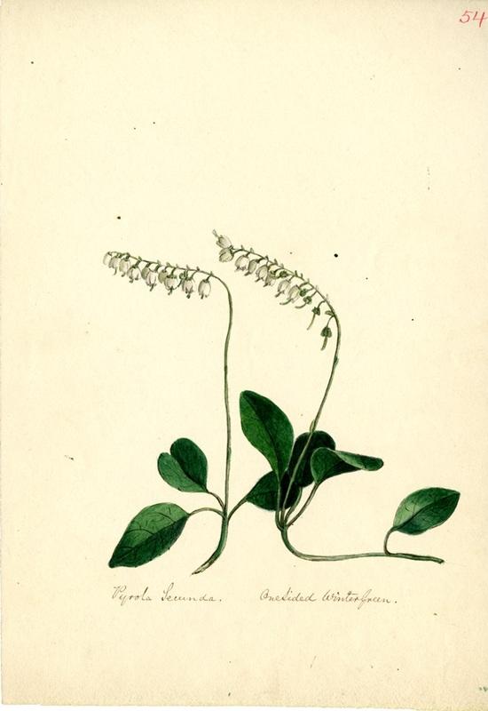 Wildflowers_54.jpg