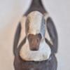 151. Small Male Squaw long tail4 0109FA 438.jpg