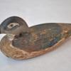 149. Small Female Wood Duck2 0123FA.jpg