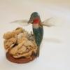 Hummingbird1_4.jpg
