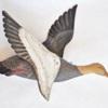 91. Female Goldeneye Duck1 0081FA 445.jpg