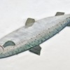 23. Flat Lg Salmon 2 388_0018FA.jpg