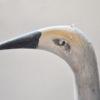 2. Standing Crane 2_447_0036FA.jpg
