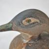 148. Small Female Wood Duck1 0123FA.jpg