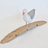 11. Small Standing Gull on driftwood 3.jpg